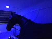 BI-COLOR-LED Pferdeanhänger